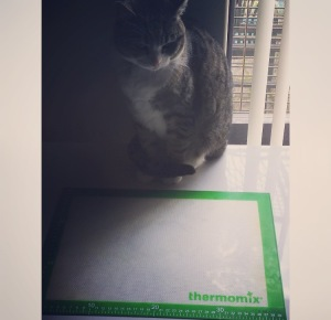 ThermoCatThermoMat